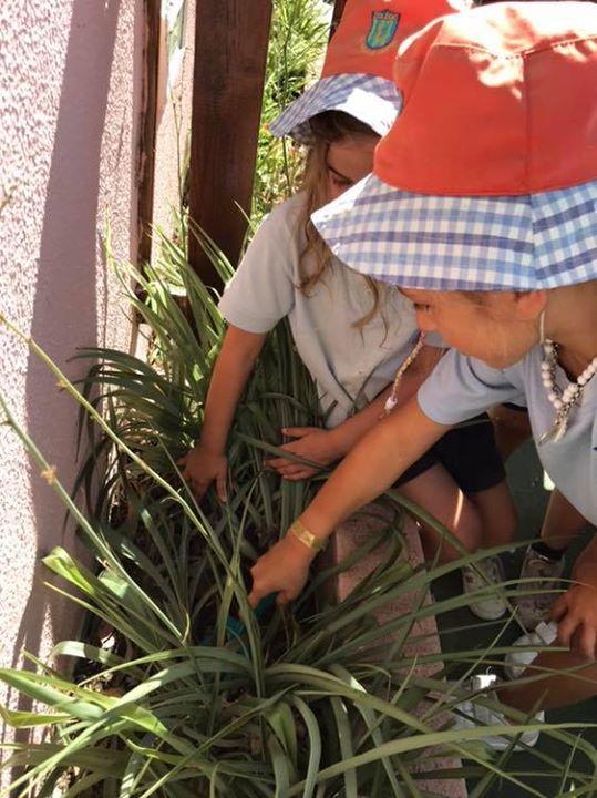 Hoje a Maria trouxe girassóis para os Reguilas plantarem